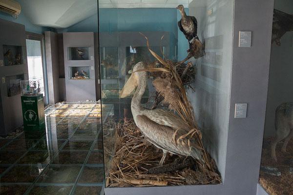 16.9. In Vranjina befindet sich das Besucherzentrum des Nationalparks Skadarsko Jezero.