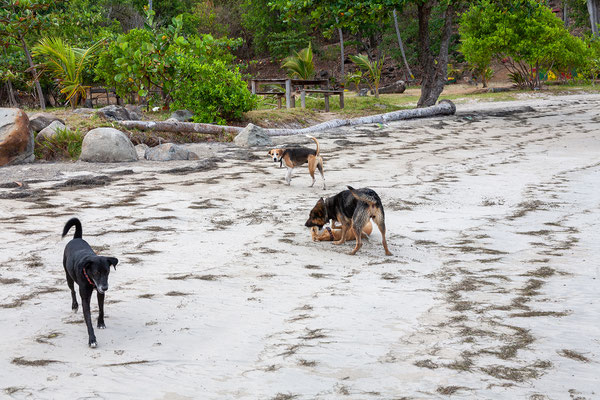 Cabier Ocean Lodge, unsere Haushunde