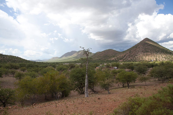 23.2. D2743 - Mopanebäume (Colophospermum mopane)
