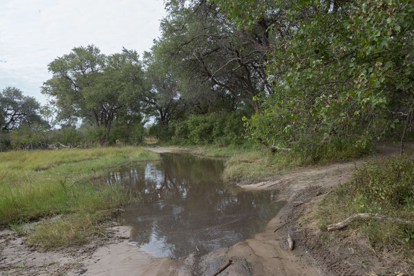 08.05. Moremi GR; die Pads sind teilweise noch überflutet, meistens gibt es jedoch Umfahrungen.