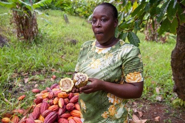 Spice and Herb Garden, das Fruchtfleisch frischer Kakaobohnen schmeckt säuerlich