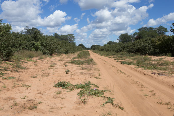 04.05. Chobe NP; es liegen etwa 80 km Sandpiste bis Linyanti vor uns.
