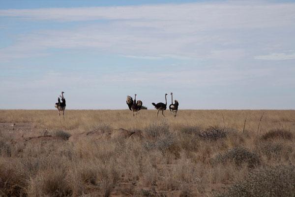 20.2. Wir fahren über den Welwitschia Drive nach Swakopmund