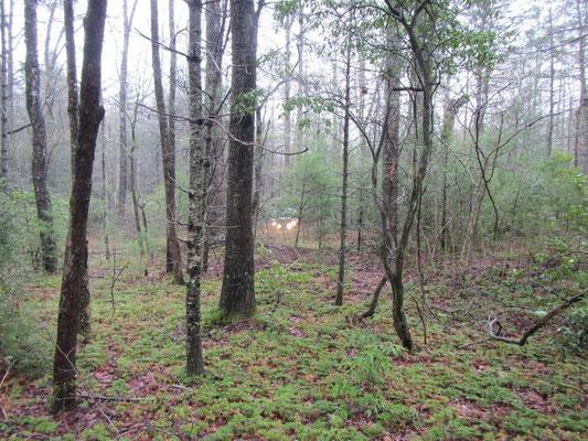Unser Stellplatz im Wald
