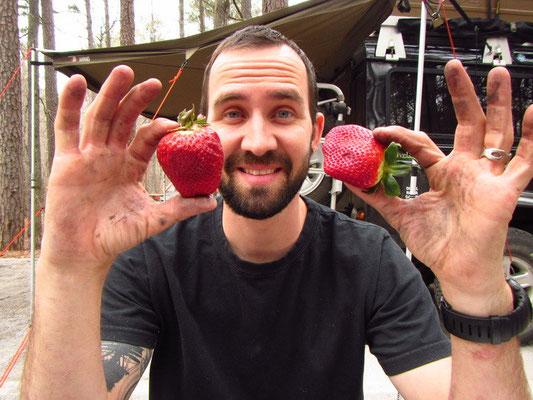 Hier in den USA ist alles grösser...auch die Erdbeeren