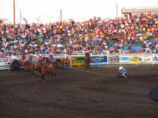 Rodeo live