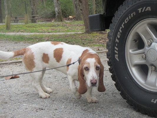 Nachbars Hund :)