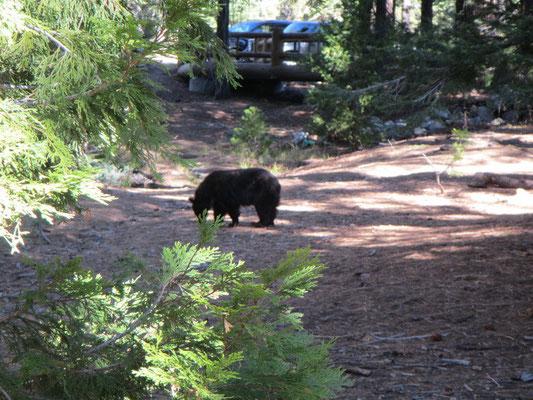 ...und mal wieder ein Bär