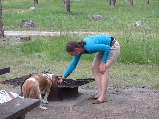 ...mal wieder ein aufdringlicher Basset im Camping :)