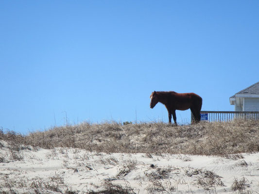...und nochmals ein Pferd