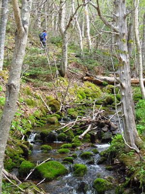 Wanderung im Cape Breton Highlands National Park