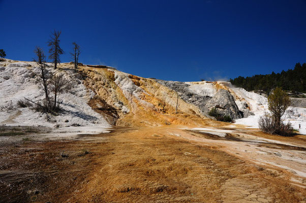 Yellowstone National Park - Mammoth Hot Springs