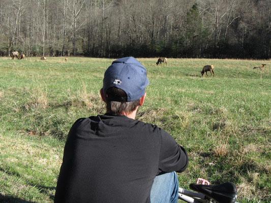 Beobachten der Wapiti Herde