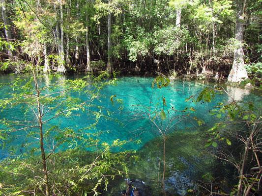 Manatee Spring mit glasklarem Wasser