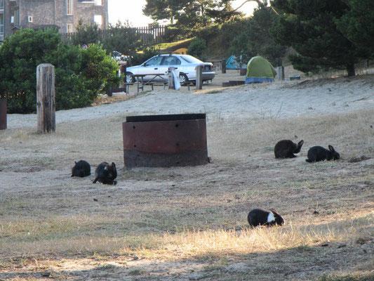 Unser Platz mit den Hasen im Pacific City