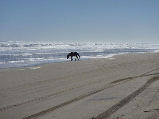 und endlich ein Mustang Pferd