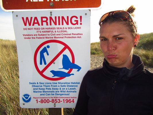 Soo viele Seehunde und Corry darf sie nicht füttern :)