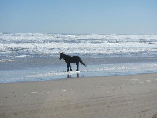 ...wie im Bilderbuch am Beach