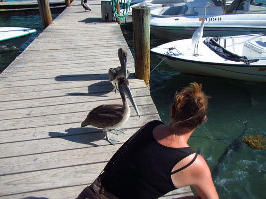 Pelikan Angriff