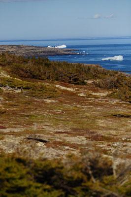 Eisberge vom Land aus