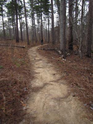 Kleiner Trail im Wald