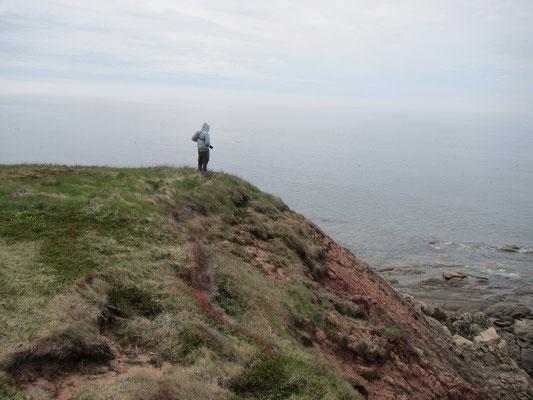 Am Adler beobachten in Cape Breton Island
