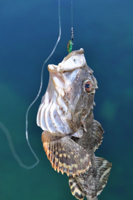 Grubby Fish