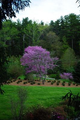 Der Garten vom Biltmore Anwesen