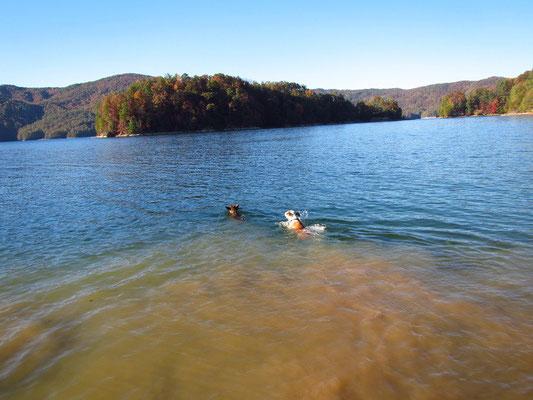 Jack & Deuce am schwimmen