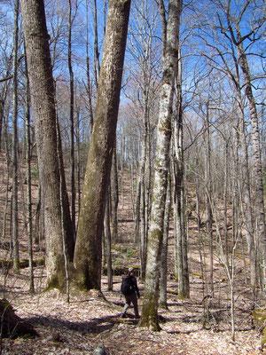 Teils ging die Wanderung durch den sogenannten Old Forest