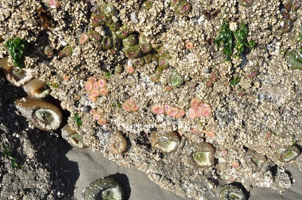 Olympic National Park - Ruby Beach