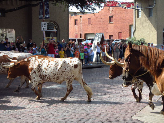 Fort Worth Stockyards District ...Longhorns