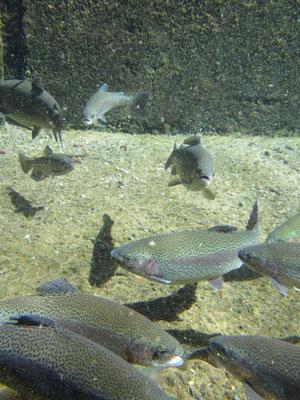 Besuch der Fischzucht