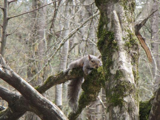 Beobachter auf dem Baum