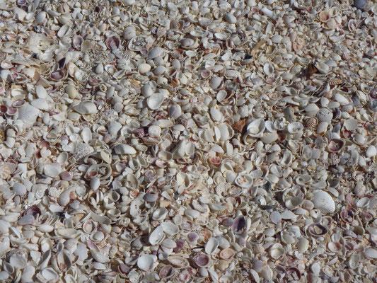 Sanibel Island ist voll von Muscheln am Strand