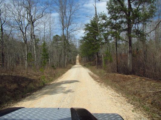 Fahrt zum nächsten Stellplatz mitten im Wald