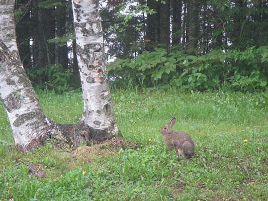 Hasen in unserem Vorgarten :)