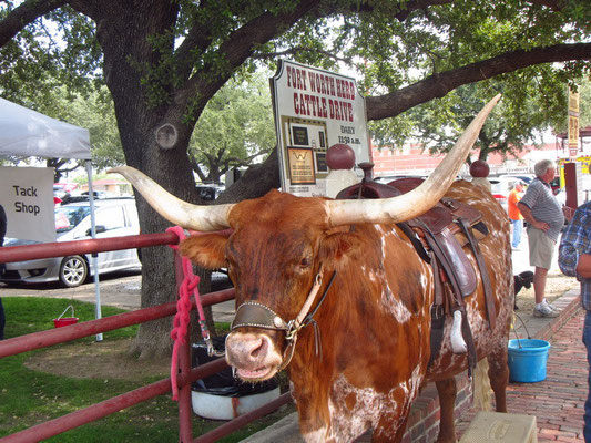 Fort Worth Stockyards District ...Longhorn