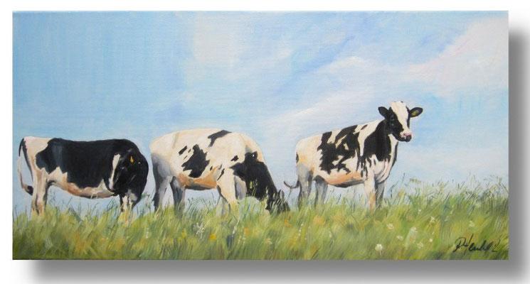 Kühe am Deich 40 x 80 (Maße prüfen)