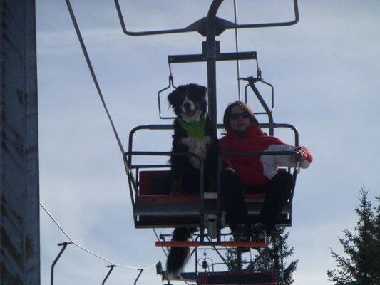 Mit dem Hund im Sessellift - Training am Silberberg