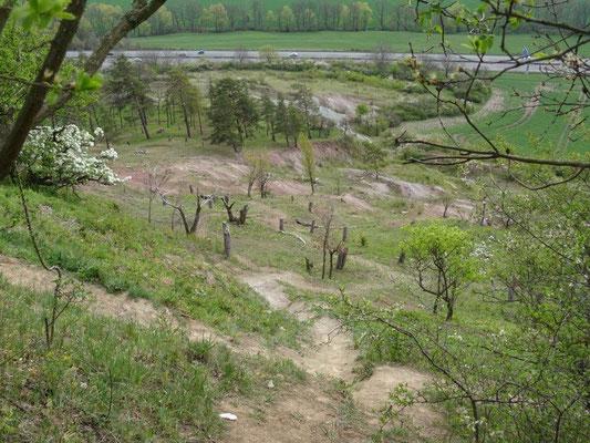 Am heißen Südhang der Burg Gleichen findet man Schwarzkiefern und Trockenrasen