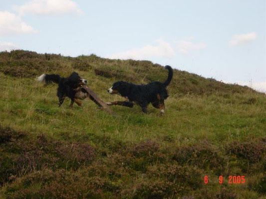 Spiel auf den Bergwiesen