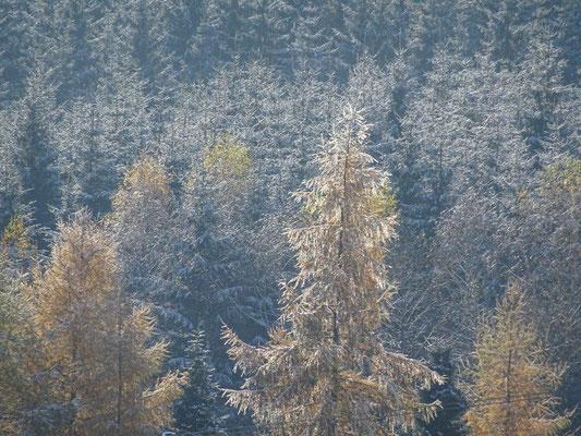 ... da hat der Winter dem Wald schon ein zauberhaftes Kleid angezogen