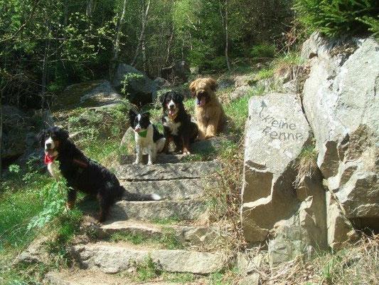 Am Aufstieg zum Brocken