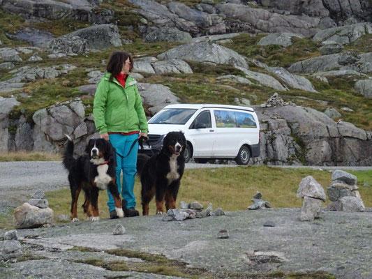 Über eine steile Gebirgsstraße ging es vom Lysefjord hinauf auf eines der ausgedehnten Fjells