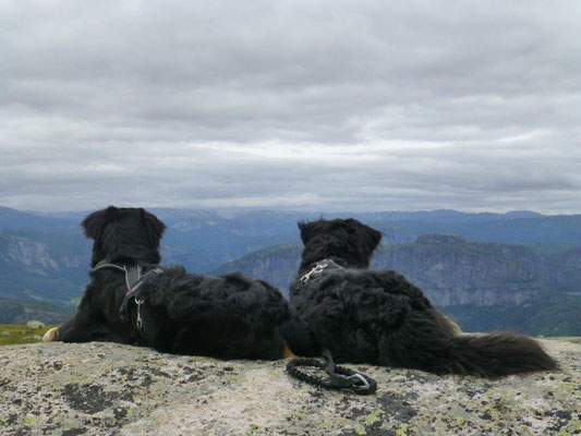 Gipfelglück am Valefjell