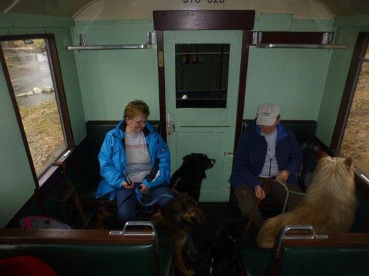 Mit 9 Hunden im Zug