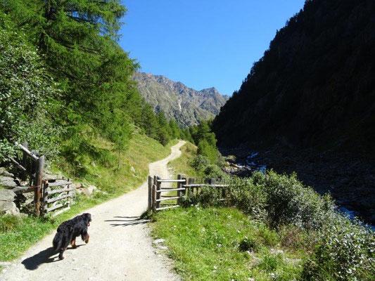 Sehr schöner Wanderweg zu den Almen im Pfossental