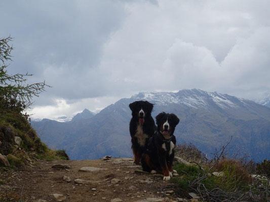 2 schwarze Bergziegen