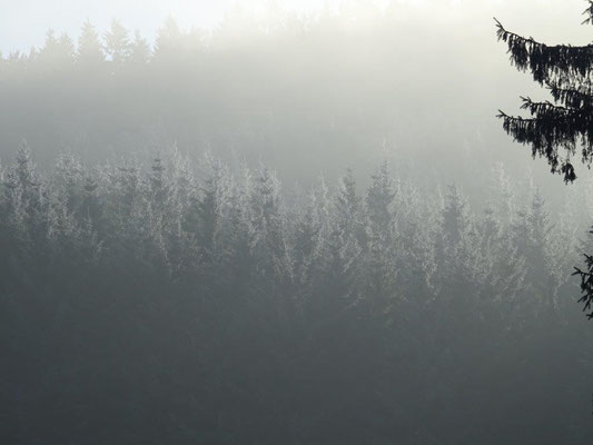 Kalter Nebel